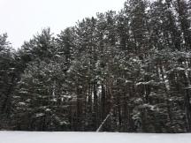 Paysages hivernaux sur la route
