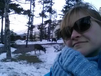 Biches de Banff