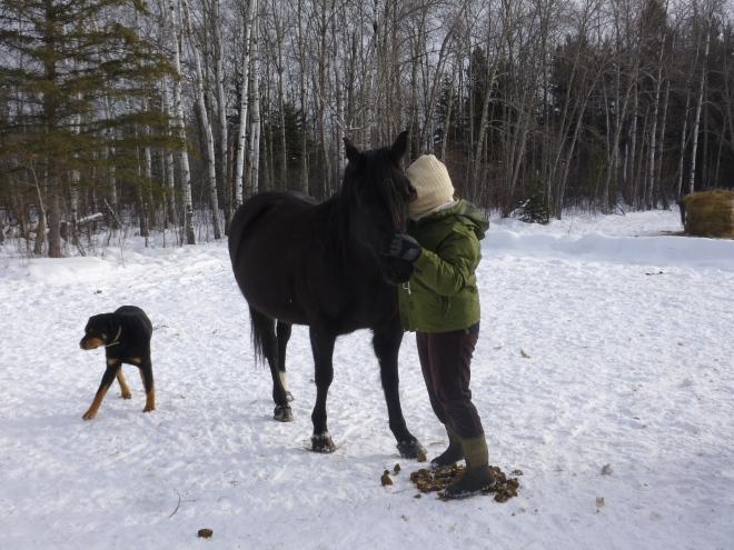 Horses (139)