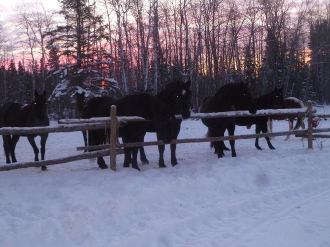 Horses (175)