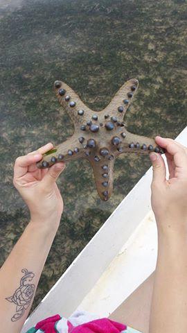 etoile de mer Bali