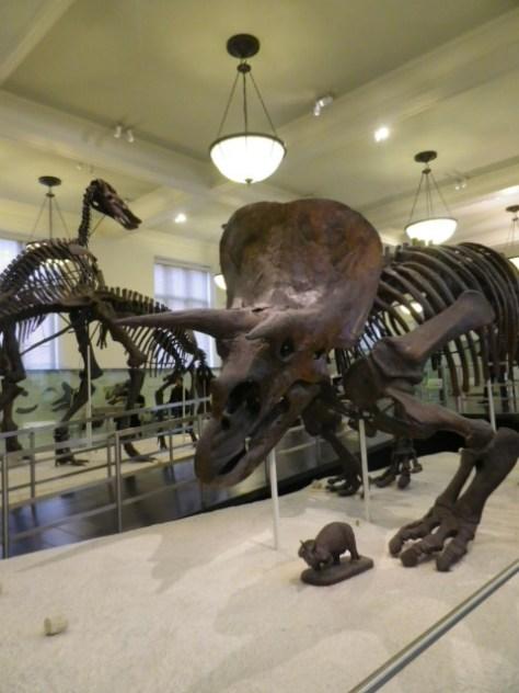 Dino du musée
