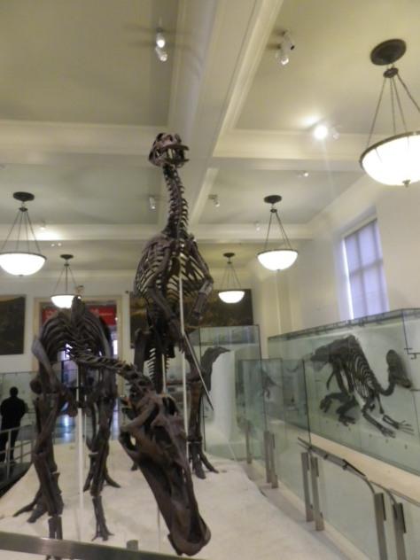 Gros dino du musée