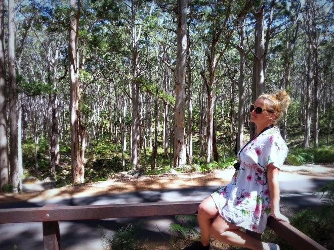 Hamelin Bay giant trees Pauline