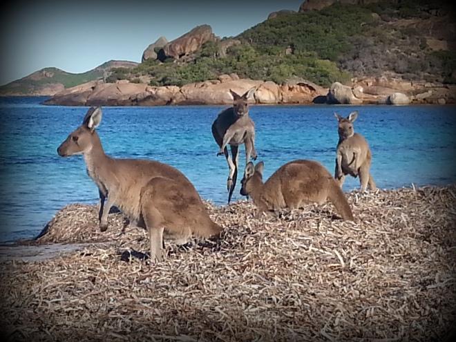 national park kangourou